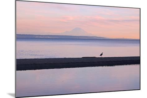 Great Blue Heron, Ardea Herodias, Near Mount Rainier in Seattle-Donna O'Meara-Mounted Photographic Print