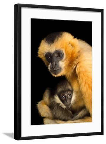 A Critically Endangered Female Northern White Cheecked Gibbon with Her Year Old Baby-Joel Sartore-Framed Art Print