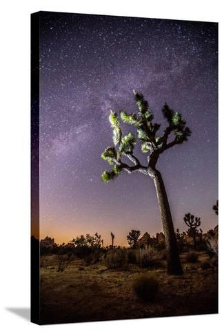 A Joshua Tree under the Milky Way-Ben Horton-Stretched Canvas Print