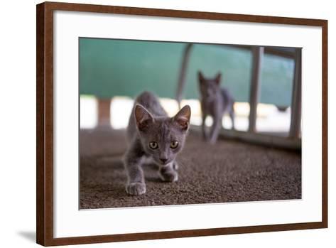 Wild Kittens Approach a Camera with Caution-Ben Horton-Framed Art Print