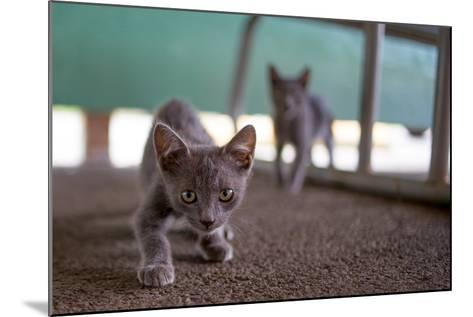 Wild Kittens Approach a Camera with Caution-Ben Horton-Mounted Photographic Print