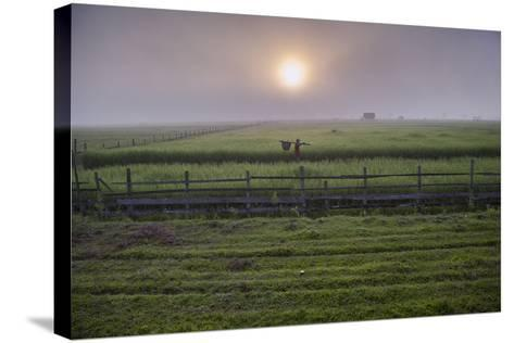A Man Walks Through Agricultural Fields-Cory Richards-Stretched Canvas Print