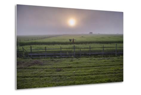 A Man Walks Through Agricultural Fields-Cory Richards-Metal Print