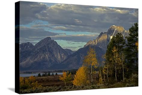 Grand Teton Mountains and Trees in Autumn-Beverly Joubert-Stretched Canvas Print