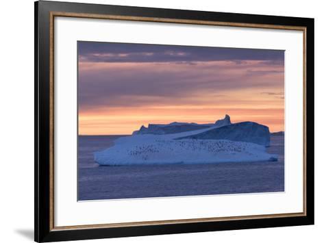 Penguins Float on an Iceberg under the Midnight Sun Just Outside Deception Island-Jeff Mauritzen-Framed Art Print
