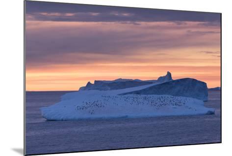 Penguins Float on an Iceberg under the Midnight Sun Just Outside Deception Island-Jeff Mauritzen-Mounted Photographic Print