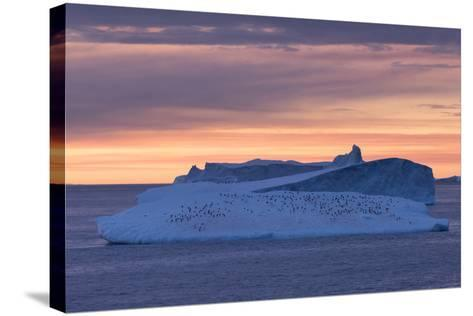 Penguins Float on an Iceberg under the Midnight Sun Just Outside Deception Island-Jeff Mauritzen-Stretched Canvas Print