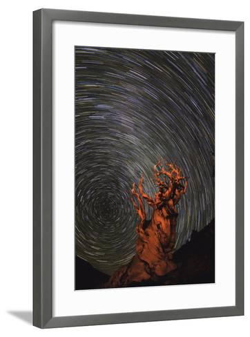 Long Exposure of Star Trails Above a Bristlecone Pine Tree in California, Usa-Babak Tafreshi-Framed Art Print