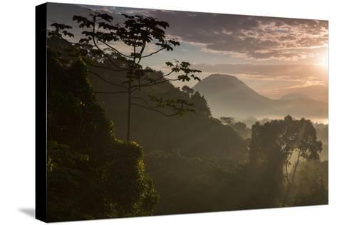 Serra Do Mar Forest in Sao Paulo State in Brazil-Alex Saberi-Stretched Canvas Print