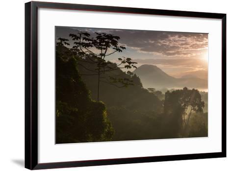 Serra Do Mar Forest in Sao Paulo State in Brazil-Alex Saberi-Framed Art Print