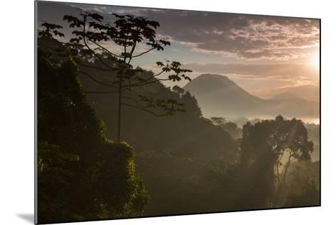 Serra Do Mar Forest in Sao Paulo State in Brazil-Alex Saberi-Mounted Photographic Print