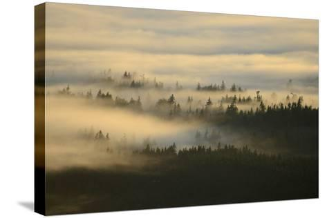 Early Morning Fog over the Olympic Mountains, from Hurricane Ridge-Raul Touzon-Stretched Canvas Print