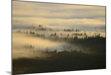 Early Morning Fog over the Olympic Mountains, from Hurricane Ridge-Raul Touzon-Mounted Photographic Print