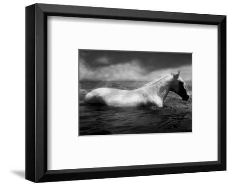 White Horse Swimming-Tim Lynch-Framed Art Print