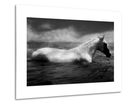 White Horse Swimming-Tim Lynch-Metal Print
