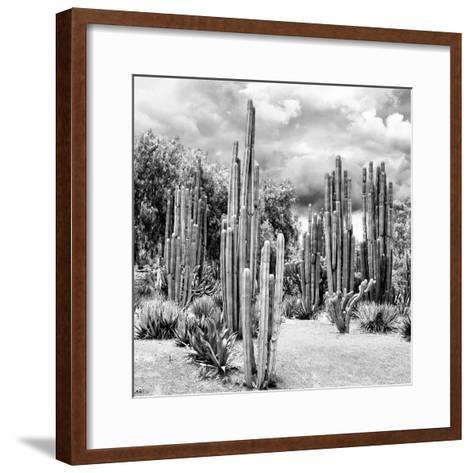 ?Viva Mexico! Square Collection - Cardon Cactus B&W II-Philippe Hugonnard-Framed Art Print