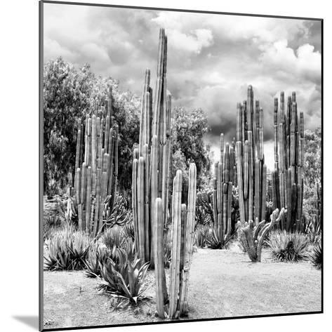 ?Viva Mexico! Square Collection - Cardon Cactus B&W II-Philippe Hugonnard-Mounted Photographic Print