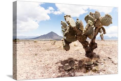 ?Viva Mexico! Collection - Desert Landscape - Puebla II-Philippe Hugonnard-Stretched Canvas Print