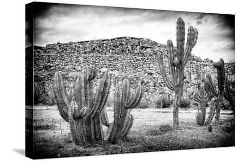 ¡Viva Mexico! B&W Collection - Mexican Cactus-Philippe Hugonnard-Stretched Canvas Print