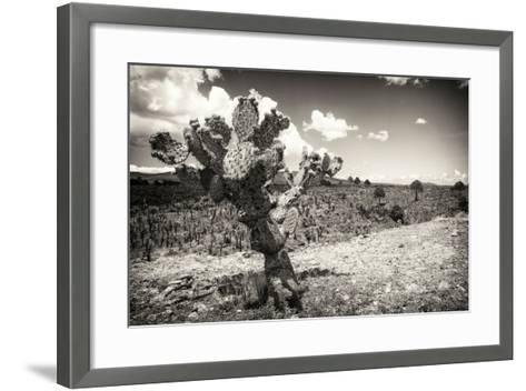 ?Viva Mexico! B&W Collection - Cactus in the Mexican Desert III-Philippe Hugonnard-Framed Art Print