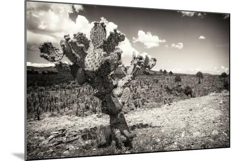 ?Viva Mexico! B&W Collection - Cactus in the Mexican Desert III-Philippe Hugonnard-Mounted Photographic Print