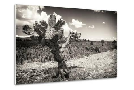 ?Viva Mexico! B&W Collection - Cactus in the Mexican Desert III-Philippe Hugonnard-Metal Print