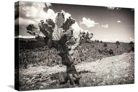 ?Viva Mexico! B&W Collection - Cactus in the Mexican Desert III-Philippe Hugonnard-Stretched Canvas Print