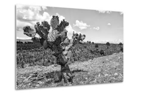 ?Viva Mexico! B&W Collection - Cactus in the Mexican Desert IV-Philippe Hugonnard-Metal Print