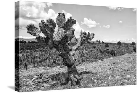 ?Viva Mexico! B&W Collection - Cactus in the Mexican Desert IV-Philippe Hugonnard-Stretched Canvas Print