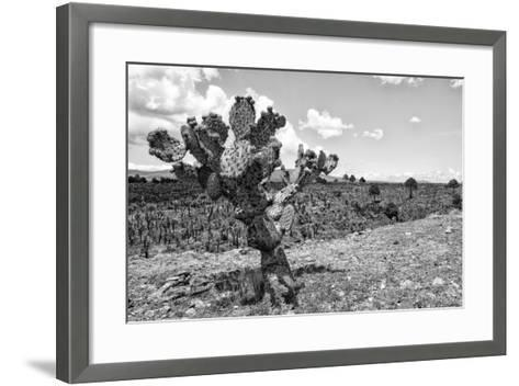 ?Viva Mexico! B&W Collection - Cactus in the Mexican Desert IV-Philippe Hugonnard-Framed Art Print