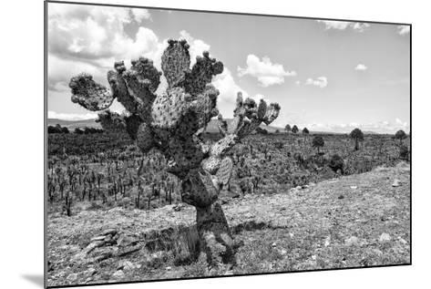 ?Viva Mexico! B&W Collection - Cactus in the Mexican Desert IV-Philippe Hugonnard-Mounted Photographic Print