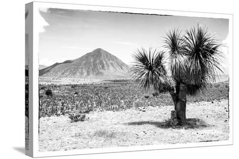 ¡Viva Mexico! B&W Collection - Mexican Desert-Philippe Hugonnard-Stretched Canvas Print