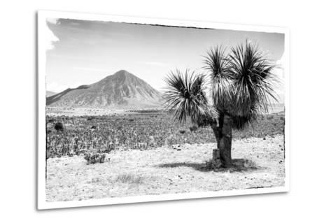 ¡Viva Mexico! B&W Collection - Mexican Desert-Philippe Hugonnard-Metal Print