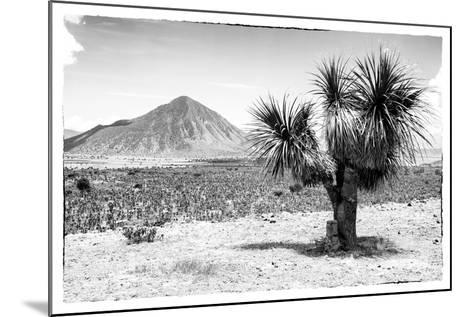 ¡Viva Mexico! B&W Collection - Mexican Desert-Philippe Hugonnard-Mounted Photographic Print
