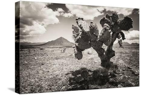 ?Viva Mexico! B&W Collection - Cactus in the Mexican Desert II-Philippe Hugonnard-Stretched Canvas Print