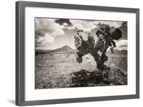 ?Viva Mexico! B&W Collection - Cactus in the Mexican Desert II-Philippe Hugonnard-Framed Art Print