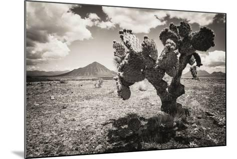 ?Viva Mexico! B&W Collection - Cactus in the Mexican Desert II-Philippe Hugonnard-Mounted Photographic Print