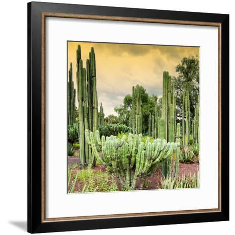 ¡Viva Mexico! Square Collection - Cardon Cactus at Sunset-Philippe Hugonnard-Framed Art Print