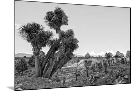 ?Viva Mexico! B&W Collection - Pyramid of Puebla VIII (Cantona Ruins)-Philippe Hugonnard-Mounted Photographic Print