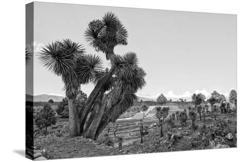 ?Viva Mexico! B&W Collection - Pyramid of Puebla VIII (Cantona Ruins)-Philippe Hugonnard-Stretched Canvas Print