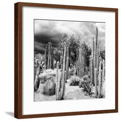 ¡Viva Mexico! Square Collection - Cardon Cactus B&W-Philippe Hugonnard-Framed Art Print