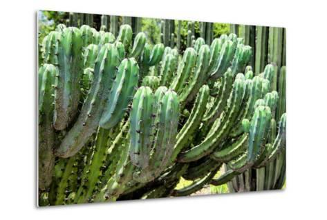 ?Viva Mexico! Collection - Cactus Details-Philippe Hugonnard-Metal Print