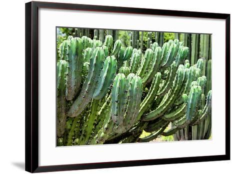 ?Viva Mexico! Collection - Cactus Details-Philippe Hugonnard-Framed Art Print