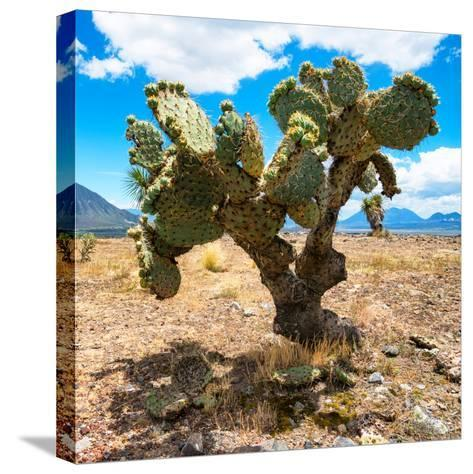 ¡Viva Mexico! Square Collection - Cactus II-Philippe Hugonnard-Stretched Canvas Print