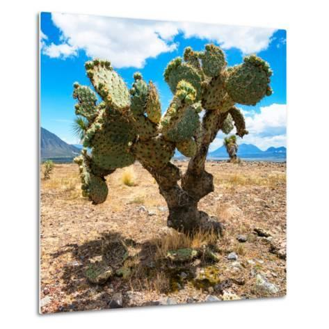 ¡Viva Mexico! Square Collection - Cactus II-Philippe Hugonnard-Metal Print
