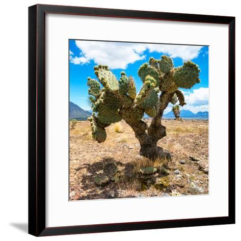 ¡Viva Mexico! Square Collection - Cactus II-Philippe Hugonnard-Framed Art Print