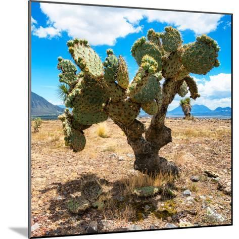 ¡Viva Mexico! Square Collection - Cactus II-Philippe Hugonnard-Mounted Photographic Print