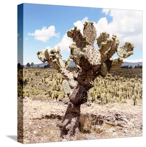 ?Viva Mexico! Square Collection - Cactus Desert IV-Philippe Hugonnard-Stretched Canvas Print