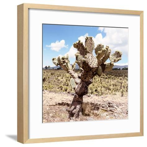 ?Viva Mexico! Square Collection - Cactus Desert IV-Philippe Hugonnard-Framed Art Print