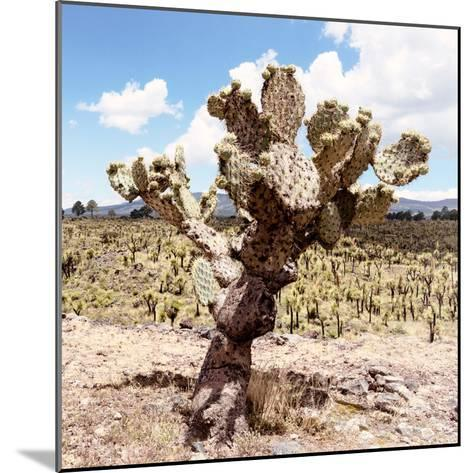 ?Viva Mexico! Square Collection - Cactus Desert IV-Philippe Hugonnard-Mounted Photographic Print